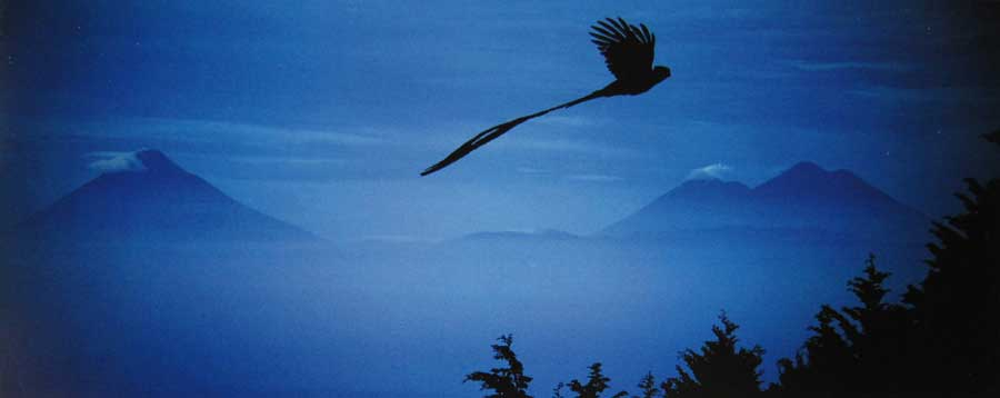 Laguna-Lodge-quetzal-flying-over-volcano