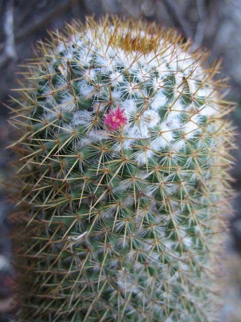 kaktus-Laguna-Lodge