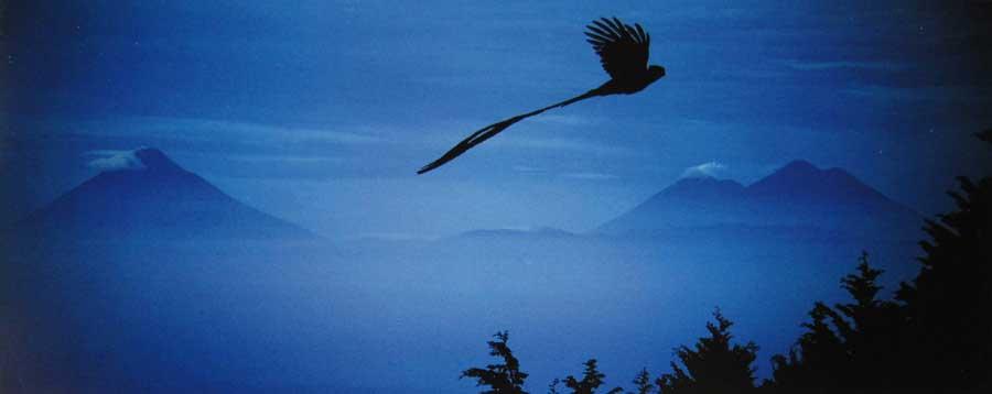 Laguna-Lodge-quetzal-flying-over-volcano